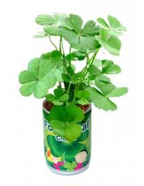 Vypestuj si štvorlístok - kvetináč