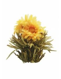 Kvitnúci čaj - Slnovrat