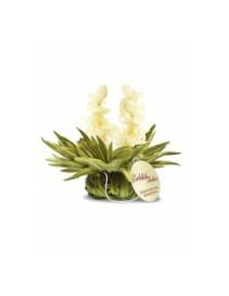 Kvitnúci čaj Tealini - Jasmín