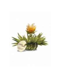 Kvitnúci čaj Tealini - Citrón